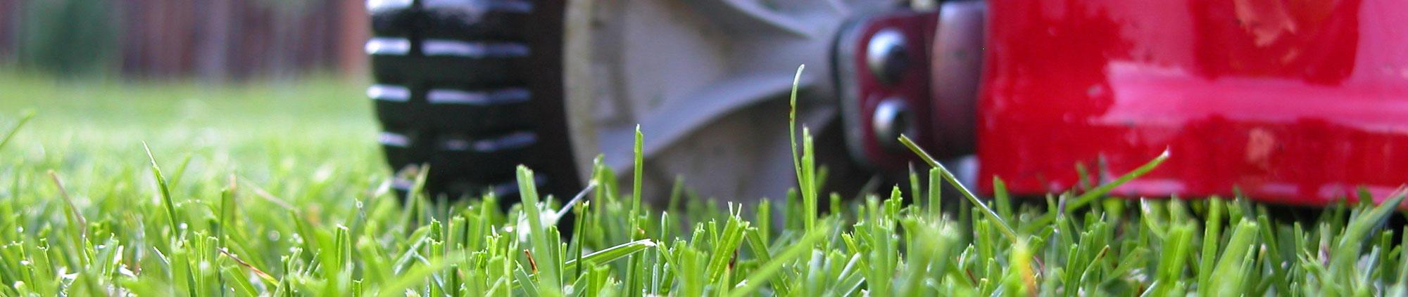 large-grasscut2